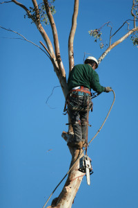 Tree Trimmer Close Up