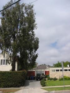 tree overhang